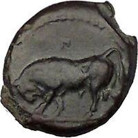 GELA in SICILY 420BC Bull River-god Gelas Rare UNPUBLISHED Greek Coin i51593