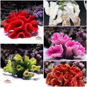 Aquarium Artificial Resin Coral Reef Fake Plants Fish Tank Landscape Decoration