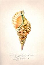 Ocean Sea shell TRITONS TRUMPET original HAND WORKED Giclee SIGNED art print