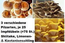 3 versch. Pilzarten, 75 Impfdübel (25 x Shiitake,Limonen- u. Kastanienseitling)