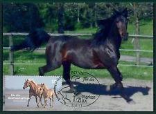 RFA MK 2007 chevaux cheval PRIVATE!!! maximum Carte CARTE MAXIMUM CARD MC cm av78