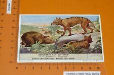 CHROMO LIEBIG 1955 S 1612 MAMMIFERES AUSTRALIE N°3 WOMBAT THYLACINE AUSTRALIA