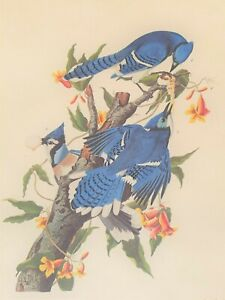 John J. Audubon Blue Jay #21 Plate CII Repro. Collection - R. Havell