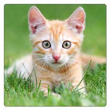 Kühlschrank - Magnet: kleine rotweiße Katze im Gras - kitten - chaton