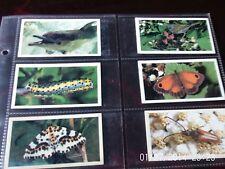 grandee cigarette cards britians wayside wildlife x6 numbers 3,5,8,19,23,24