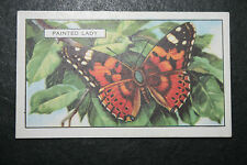 Painted Lady Butterfly   Vintage 1930's Colour Card  # VGC