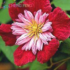 USA-Seller 100pcs/lot Mix Beautiful Clematis Seeds Bonsai Flower Seeds
