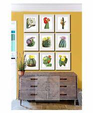 Cacti plants botanical art prints set of 9 southwestern decor desert summer art