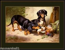 Vintage English Print Dachshund Dog Quail Art Picture