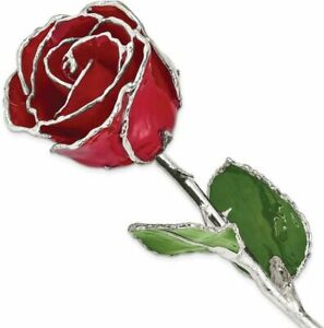 Lacquer Dipped Silver-Tone Trimmed Red Rose