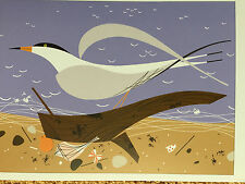 Charley Charles Harper   Ternscape  New  Art print   beach shells ocean Tern