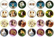 24  Guinea pigs cute kids funny toppers birthdays party edible paper