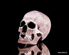 Human female skull replica - REAL SIZE, BRAND NEW (No.1C)