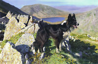 Steven Townsend READY TO START (Unframed) Border Collie Bordie Lake District Art