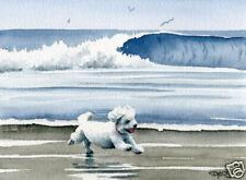 BICHON FRISE BEACH Dog Watercolor 8 x 10 ART Print Signed DJR