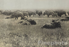 c.1900/72 Vintage EDWARD CURTIS Native American Indian Bison Buffalo Photo Art