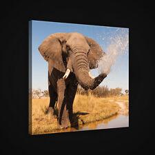 CANVAS Wandbild Leinwandbild WASSER AFRIKA NATUR TIEREN TIER ELEFANT 3FX2602O2
