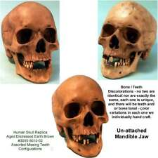 Aged Distressed Human Skull-Life Size Replica Relic Earth Brown #3093-9010 Usa