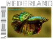 Nederland 2013 Ucollect Betta splendens vis fish   postfris/mnh