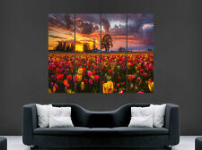 SUNSET NATURE EVENING TULIPS FIELD POSTER FLOWERS SPRING PRINT LARGE HUGE