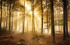 Fototapete Wald am Morgen Nr.391  Größe: 400x280cm Bäume Baum Wälder Herbst