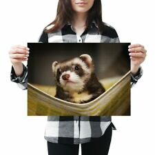 A3 - Ferret Hammock Pet Rodent Animal Poster 42X29.7cm280gsm #16329