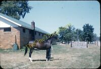 Canfield Ohio Horse Fair 1950s 35mm Slide Vtg Red Border Kodachrome