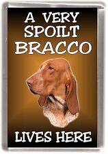 "Bracco Italiano Dog Fridge Magnet ""A VERY SPOILT BRACCO LIVES HERE"" by Starprint"