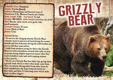 Grizzly Bear, Canada & Alaska US, North America --- Animal Information Postcard