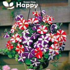 PETUNIA STAR MIX - DWARF F2 HYBRIDS - 100 seeds - Petunia multiflora hybrid F2