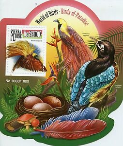 Sierra Leone 2015 MNH Birds of Paradise 1v S/S Greater Bird-of-Paradise Stamps