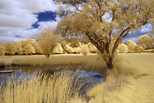 Nikon D80 Infrared converted 590nm Goldie, Super colour. DSLR infrared Body only