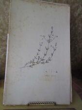 Vintage Print,STELLARIA ULAGINOSS,Botanical,Flora Londinensis,Curtis,1798