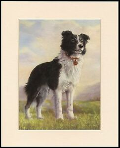 BORDER COLLIE STANDING DOG CHARMING PRINT MOUNTED READY TO FRAME