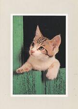 POSTCARD / CARTE POSTALE ILLUSTRATEUR / B. JOSE DUPONT / JACANA / / CAT / CHAT