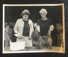 Vintage Dog Show Champion Winner Press Photo Norfolk Norwich Yorkshire Terrier