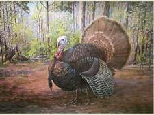 WILD TURKEY in Woods