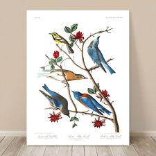 """FAMOUS BIRD ART ~ CANVAS PRINT  8x10"""" ~ JOHN AUDUBON ~ Blue Birds & Warbler"""