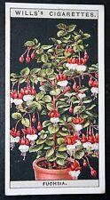 FUCHSIA  Potted Plant  Superb Vintage Colour Card # VGC