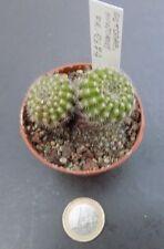 tu environ 3-4 cm environ 4-5 cm Notocactus muricatus Monopoli