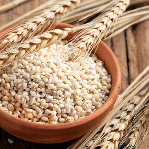 Pearl Barley Rice Seeds 100g (3.52oz )Premium Quality Pearled Barley ORGANIC