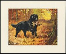 FLAT COATED RETRIEVER WITH GAME GREAT DOG PRINT MOUNTED READY TO FRAME