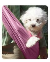Susan Lanci Sport Travel Sling for small dogs in PURPLE - SIZE MED
