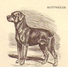Rottweiler - Vintage Dog Print - 1954 Megargee