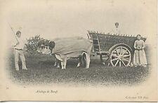 CARTE POSTALE / POSTCARD / ATTELAGE DE BOEUFS / 1900