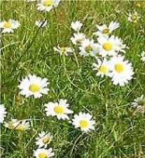 Wild Flower - Economy General Purpose - Meadow Seed Mix - 100g - Bulk Packet