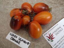 Tomate Indigo Kumquat Orange - 10+ Samen - Atemberaubend und Fein!