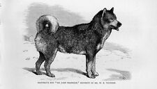 Stampa antica CANE CANADIAN ESKIMO DOG 1879 Old print dog