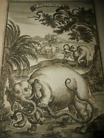 1683 ENGRAVING MALLET UGANDA/EAST AFRICA. 'Dragons' in the Mountains of the Moon