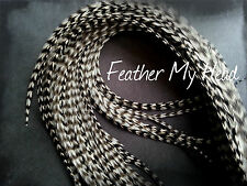 Whiting Super Euro Extra Long Length Feather Hair Extensions 12 Inches Or Longer
